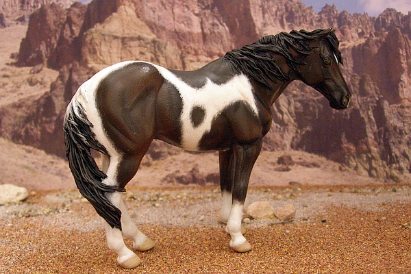 collecta appaloosa page 12 mold show horses model horse forum of mpv. Black Bedroom Furniture Sets. Home Design Ideas